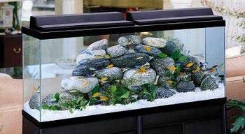 Best Gallon Fish Tanks You Can Buy Right Now Aquariphiles Jpg 350x192 55 Glass Top
