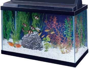 Review of 15 gallon all glass aquarium aag10015 fish tank for 15 gallon fish tank