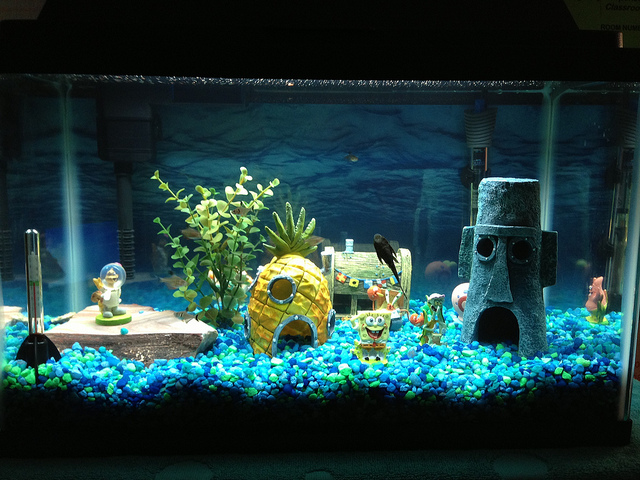 Fish tank decorations a simple guide aquariphiles for Aquarium decoration idea