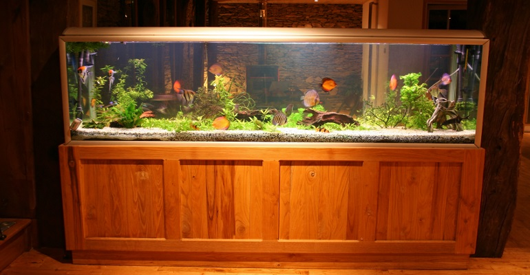 Dragon Chinese Aquarium Decoration Themes likewise Dirty Bread Futures together with 15 Ideas Decorate Home Aquarium together with 10 Steps To Make A Betta Fish Aquarium furthermore Assemble Bottom Part Of Wire Shelving Unit. on oscar fish tank house