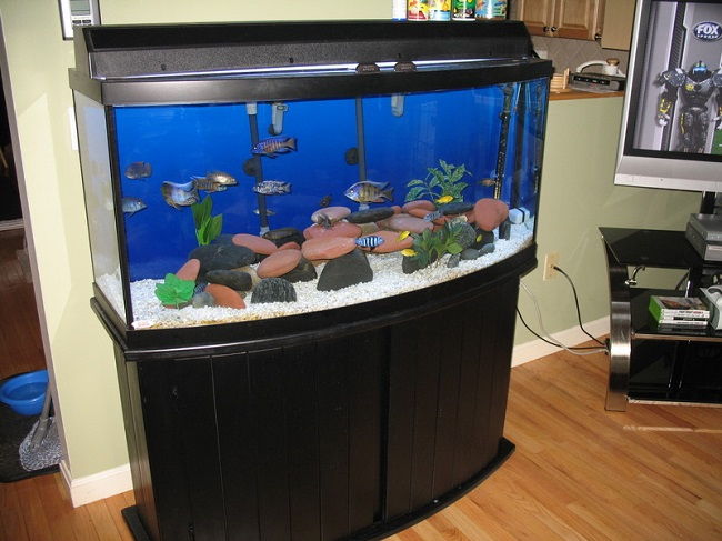 Exploring the best bow front aquariums for your home for Corner fish tank for sale