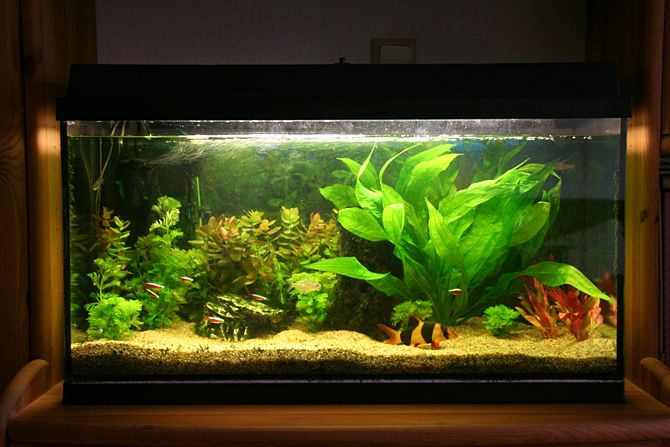 tweaking-aquarium-in-winter