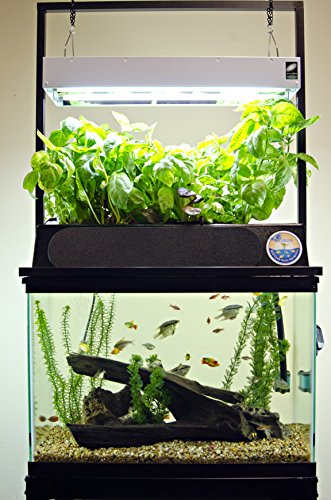 Best self cleaning fish tank of 2016 a detailed guide for Self sustaining fish tank