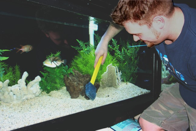 How to clean a fish tank in 5 easy to implement steps for How to clean a fish tank
