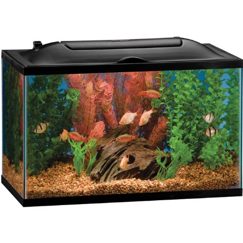 A guide to finding the best 10 gallon fish tank for you for 10 gallon fish tanks