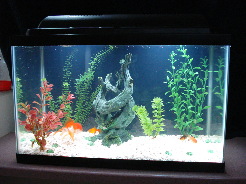 Fish tank electricity cost - 10 Gallon Fish Tank