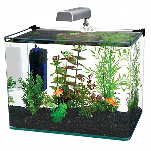 A guide to finding the best 10 gallon fish tank for you for 5 gallon glass fish tank