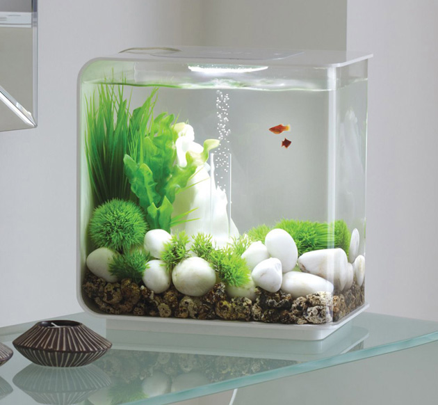 best acrylic fish tanks that money can buy in 2016