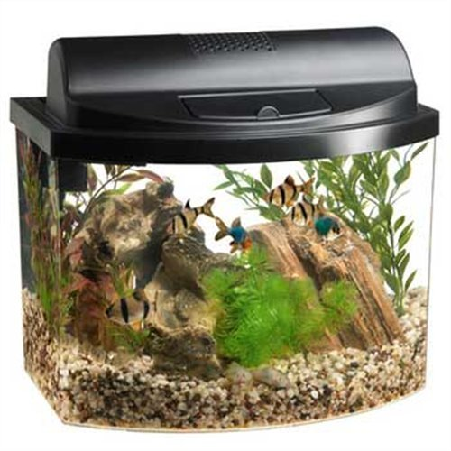 Exploring The Best Bow Front Aquariums For Your Home