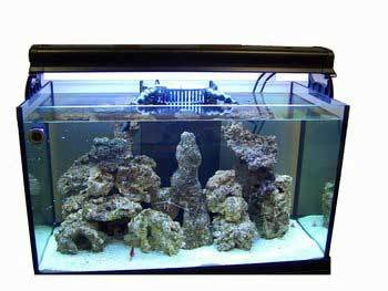 Best 75 gallon fish tank the ultimate buying guide for 10 gallon fish tank size