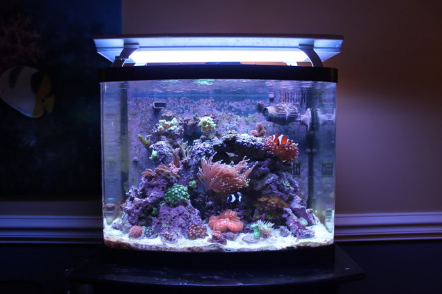 & An In-depth Review of Coralife Biocube Aquarium